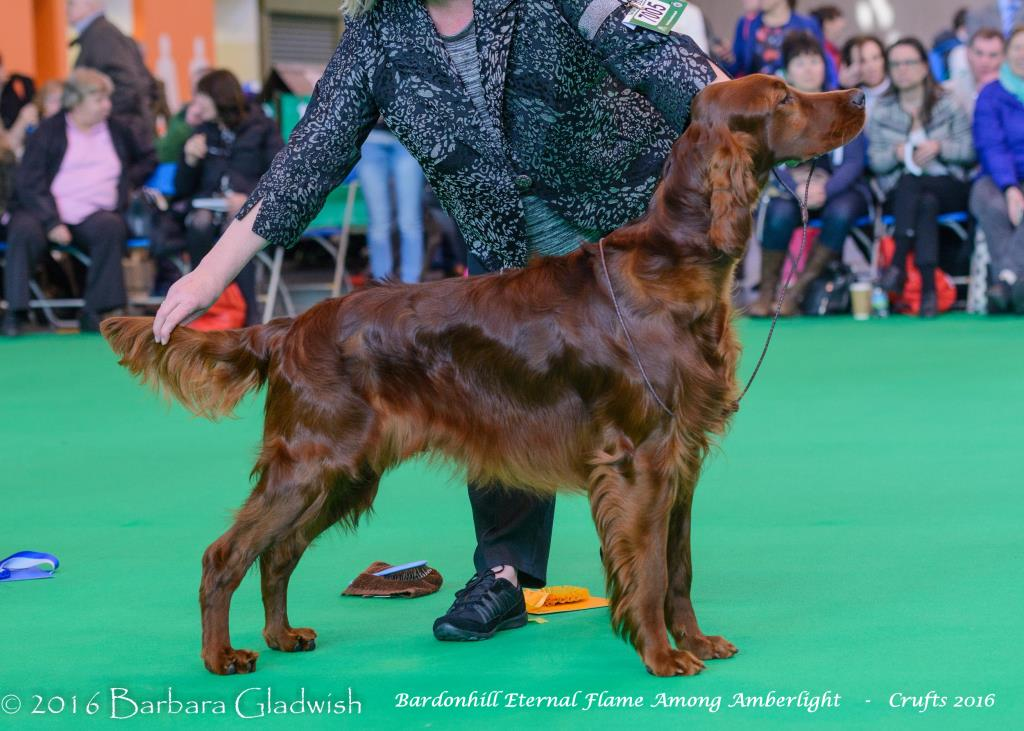 b eternal flame crufts 2016 gladwish DSC 4638