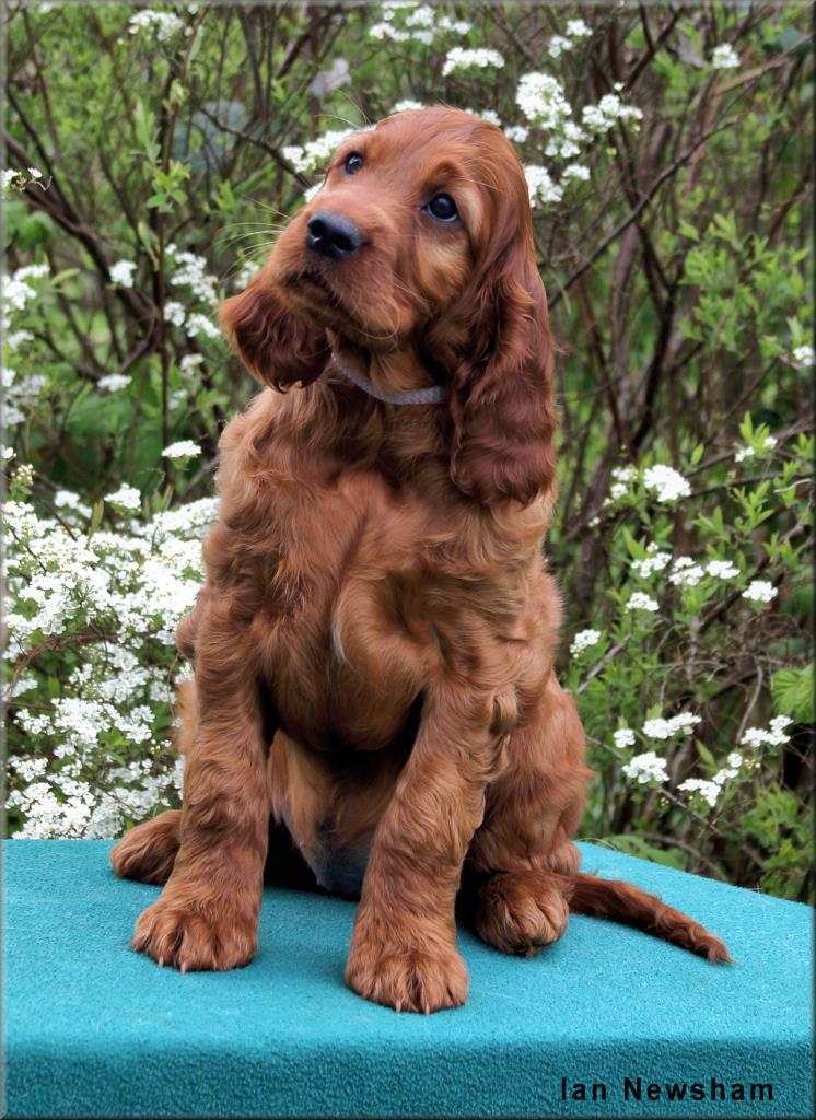 Bitch Lilac Collar 8wks Eileens Litter 2019 0B5A7562
